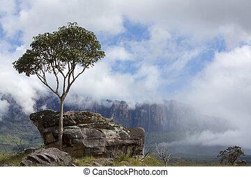Roraima Tepui or table mountain in Canaima, Venezuela - ...
