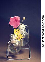 rosÈ, blumen, gänseblumen