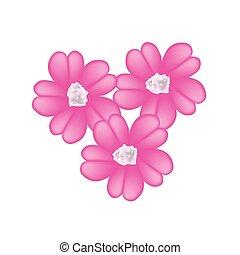 rosa, achillea, milenrama, millefolium, flores, o