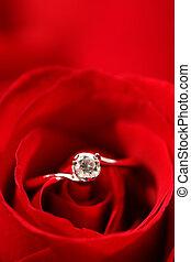 rosa, anillo