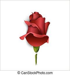 rosa, augurio, borgogna, fondo., carta, bianco, scheda