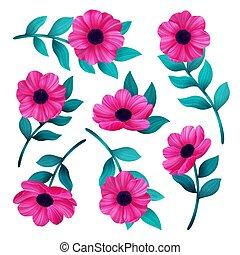 rosa, bello, fiore, set., isolato, illustrazione, fondo., vettore, digitale, selvatico, fiori bianchi
