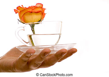 rosa, bevanda, vetro, mano