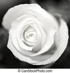 rosa, bianco, nero