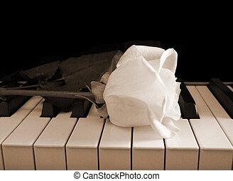 rosa, bianco, pianoforte