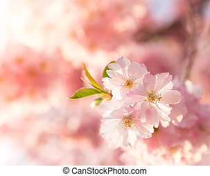 Rosa, Blüte, umrandungen, hintergrund, Fruehjahr