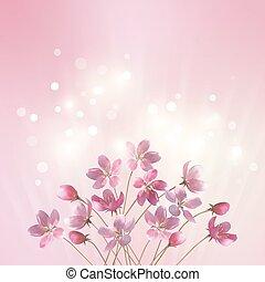 rosa blüten, hintergrund, blank