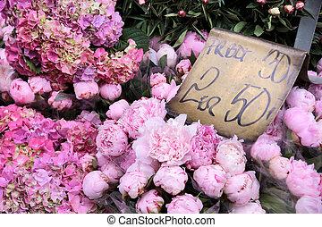 rosa blüten, in, a, floristik