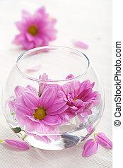 rosa blüten, in, glas vase