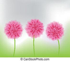 rosa blüten, natur