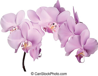 rosa blüten, orchidee