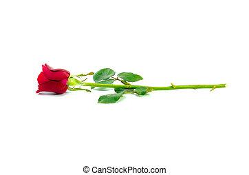 rosa, blanco, aislado, plano de fondo, rojo