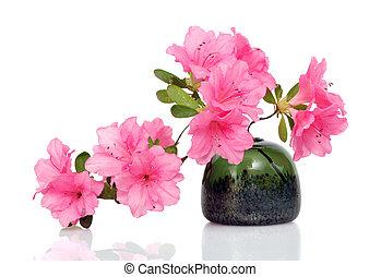 rosa, blanco, azalea