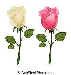 rosa, blanco, vector, aislado, plano de fondo