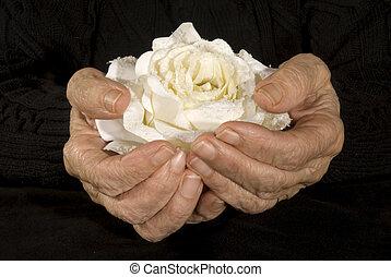 rosa, blanco, viejo, manos de valor en cartera