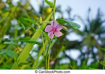 rosa blommar, in, grön fond