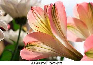 rosa blommar, på, grön fond
