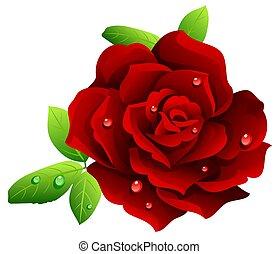 rosa, bordeaux