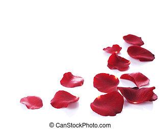 rosa, bordo, petali