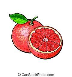 rosa, bosquejo, maduro, toronja, ilustración, vector, unpeeled, mitad, entero