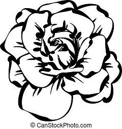 rosa, bosquejo, negro, blanco
