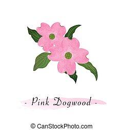 rosa, botanico, giardino fiore, colorito, cornus, florida, struttura, acquarello, vettore, dogwood
