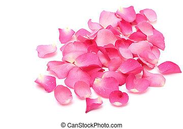 rosa, branca, closeup, fundo, pétalas