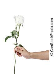 rosa, branca, isole, segurando mão