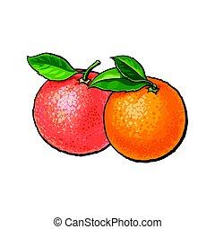 rosa, brillante, hojas, toronja, verde, naranja, fresco, entero