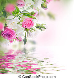 rosa, bukett, bakgrund., roses., blommig, vit
