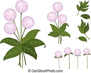 rosa, carino, isolato, fondo., fiori bianchi