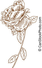 rosa, caule, desenho