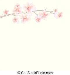 rosa, ciliegia, blossom., isolato, fondo., flowers., vettore, sakura, ramo, luce, fiori bianchi