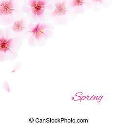 rosa, ciliegia, fiori, bordo