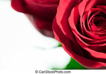 rosa, cima, experiência., fim, branco vermelho