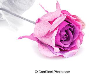 rosa colore rosa