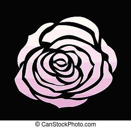Rosa Colore Rosa Sfondo Nero