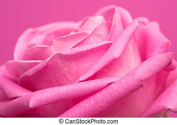 rosa colore rosa, magenta, fondo