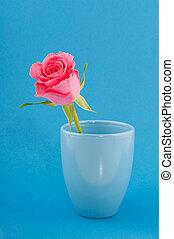 rosa colore rosa, singolo, blu