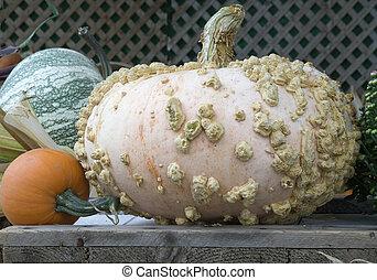 rosa colored pumpkin