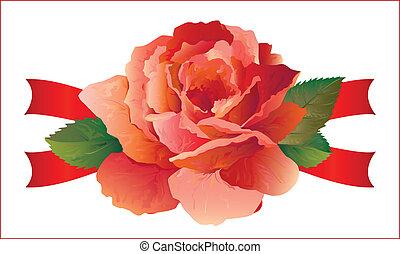 rosa, com, fitas