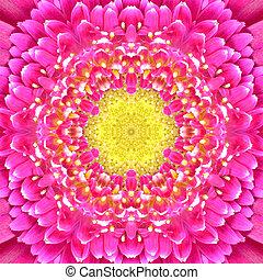 rosa, concéntrico, flor, center., mandala, caleidoscópico,...