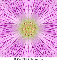 rosa, concéntrico, flor, centro, mandala, calidoscopio