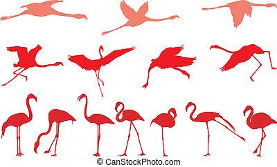 rosa, conjunto, flamenco, vectors