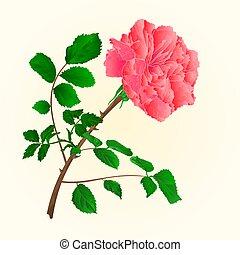 rosa, cor-de-rosa, flores, caule, com, folhas, vector.eps