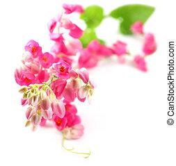 rosa, coral, vid
