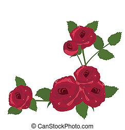 rosa, cornice