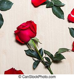 rosa, día de valentines