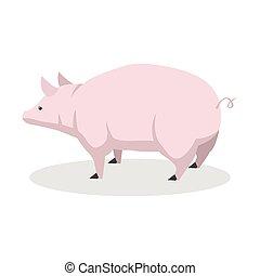 rosa, disegno colore, illustrazione, maiale