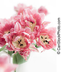 rosa, doble, peonía, tulipán